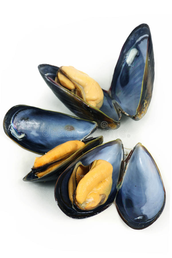 Mussel. Photo of Mussel isolated on white stock image