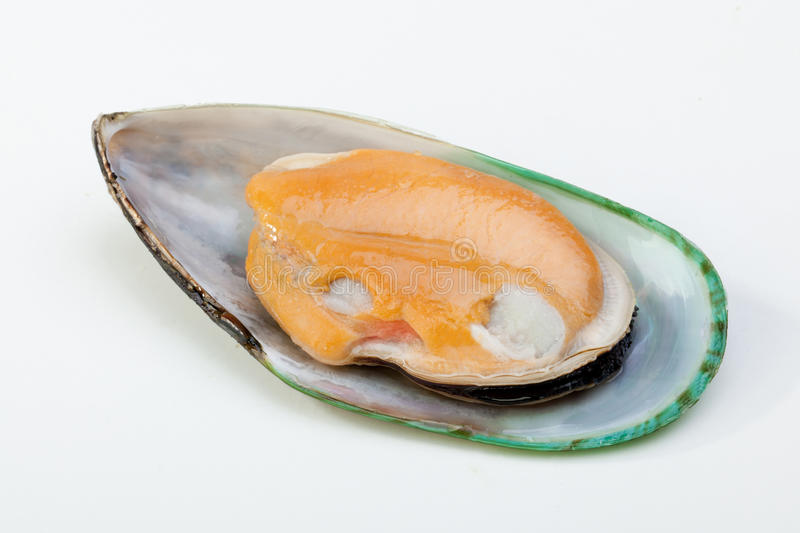 Mussel. New Zealand mussel in a white background stock photos