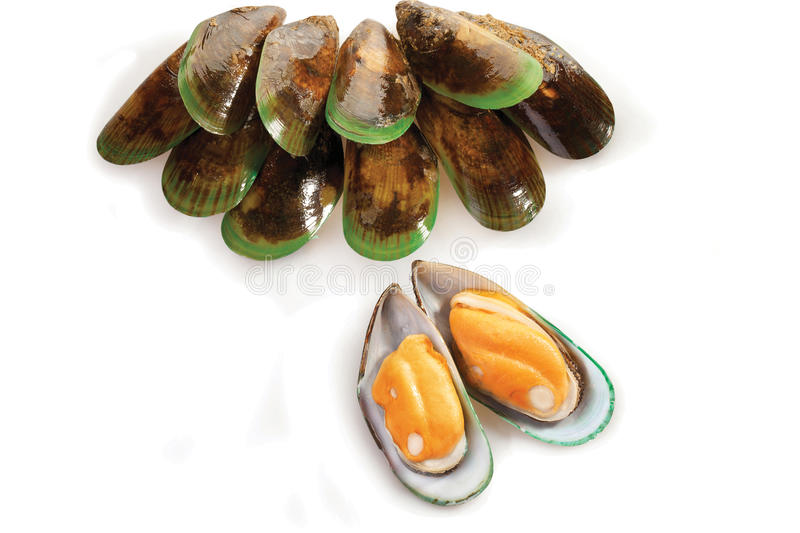 Download Mussel stock photo. Image of shell, orange, mollusc, many - 14861558