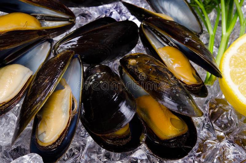 Mussel. Cooking ingredient series mussel. for adv etc. of restaurant,grocery,and others royalty free stock photo