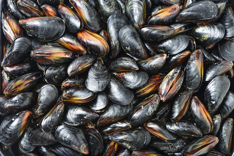 Mussel for backround. A group of mussel for backround royalty free stock image