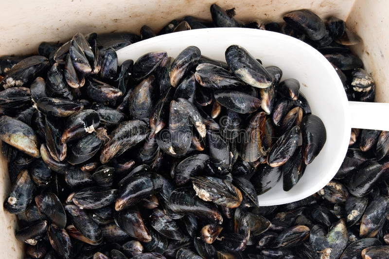 Mussel basket. In the fishmarket royalty free stock photography