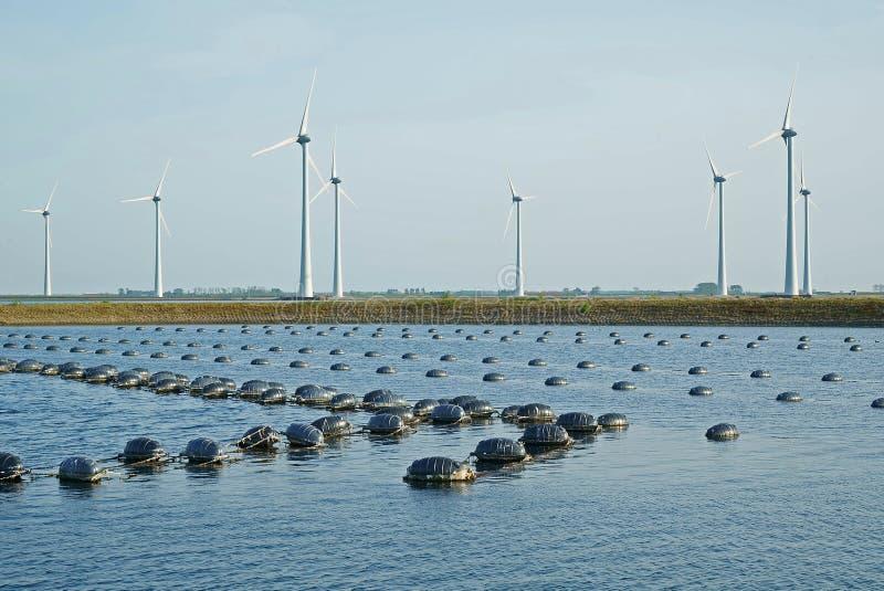 Mussel deponuje pieni?dze w Oosterschelde w Zeeland przy wiatraczka parkiem fotografia royalty free