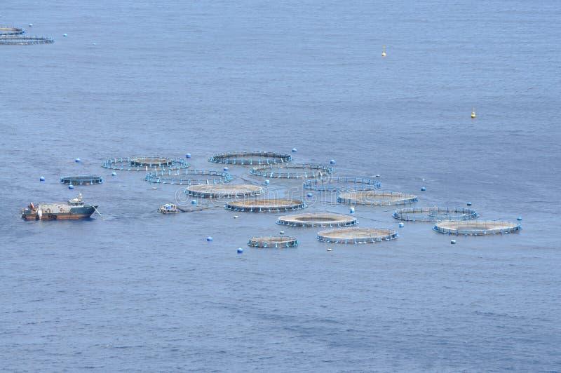 Download Mussel farm stock photo. Image of ocean, farm, atlantic - 11438808