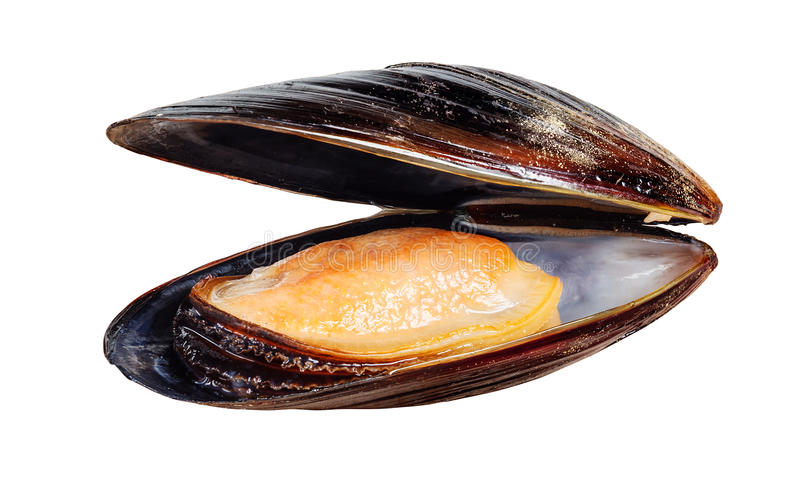 Mussel isolated on white. Boiled mussel isolated on white royalty free stock photography