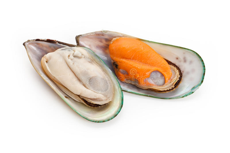 Mussel. Raw Mussel with white background royalty free stock images