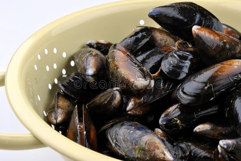 Mussel ready to clean in a sieves. Organic mussel ready to clean in a sieves stock image