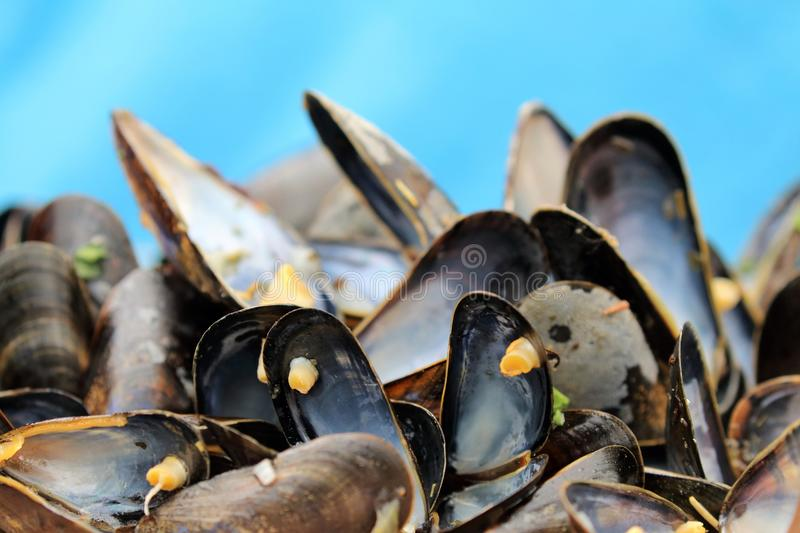 Mussel shells on blue background royalty free stock images