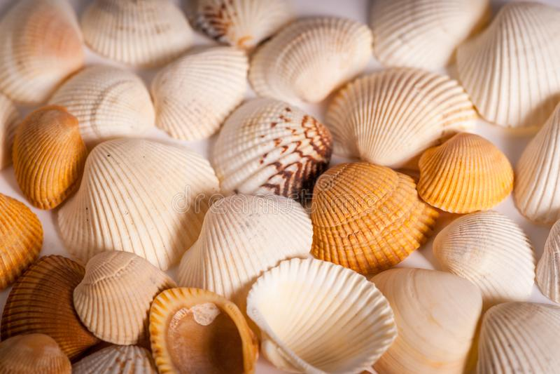 Mussel skorupy - Kolorowy Molusces obraz royalty free