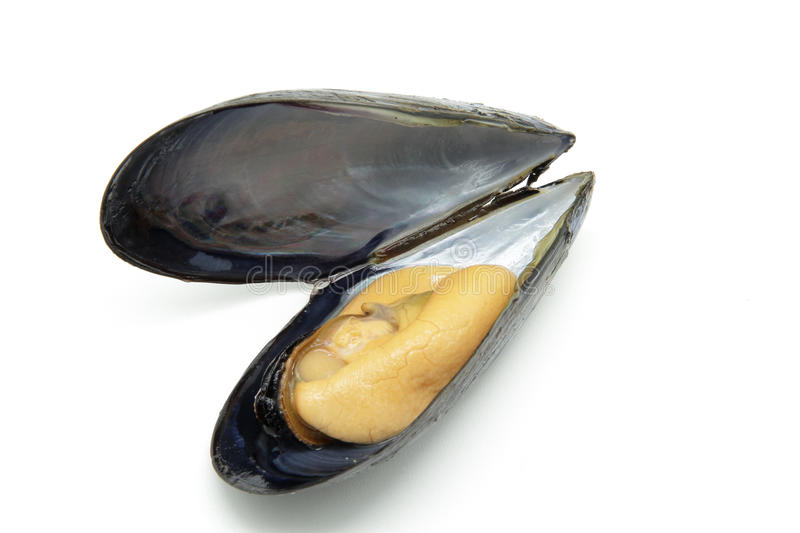Mussel. Tasty mussel isolated on white background royalty free stock photos