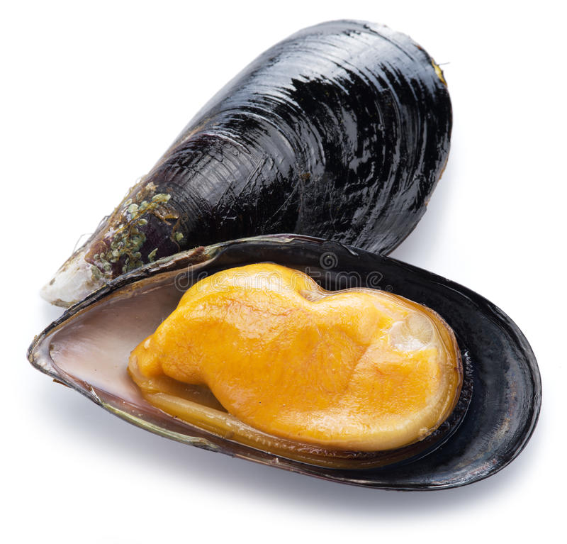 Mussel on a white background. Boiled mussel on a white background stock photos