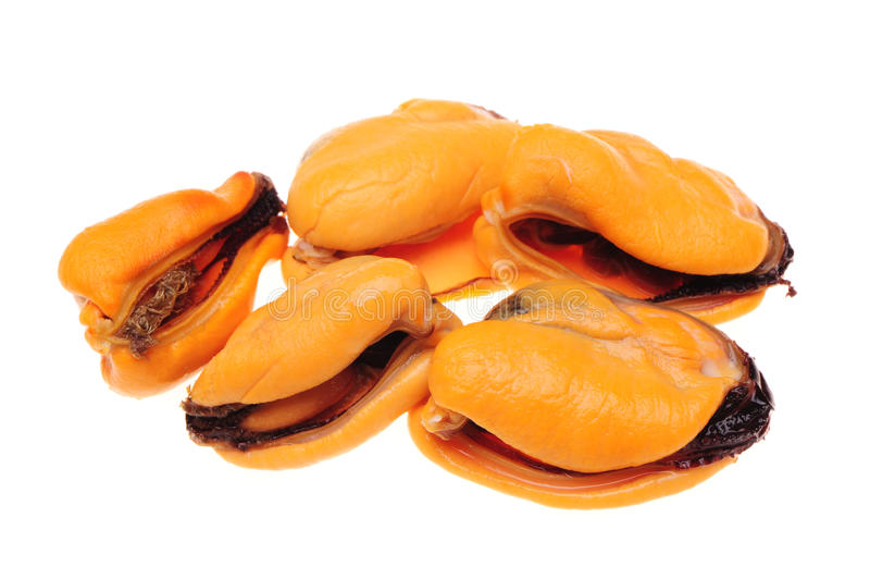 mussels obraz royalty free