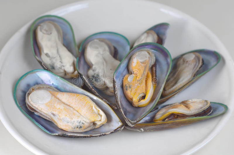Download Mussels stock image. Image of up, food, green, shellfish - 26500081
