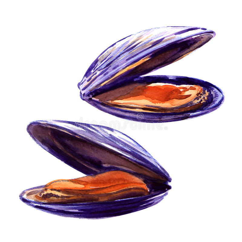 mussels royalty ilustracja