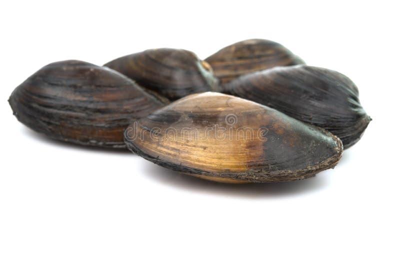 Download Mussels zdjęcie stock. Obraz złożonej z kuchnia, menu - 57663486