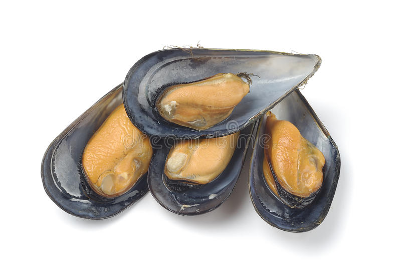 mussels zdjęcia stock