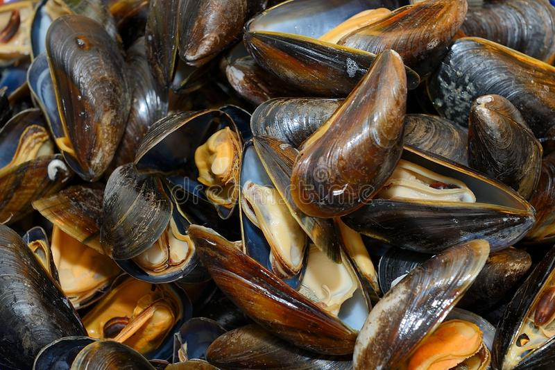 Mussels w winie obraz royalty free
