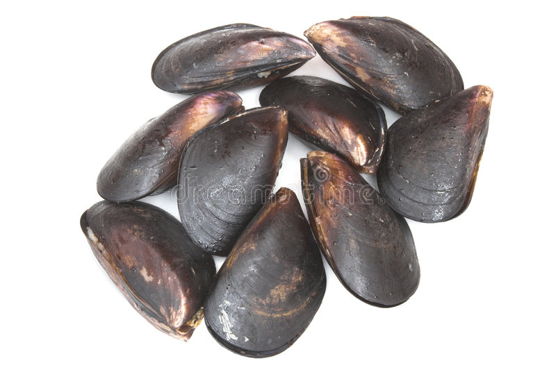 Mussels on white royalty free stock image