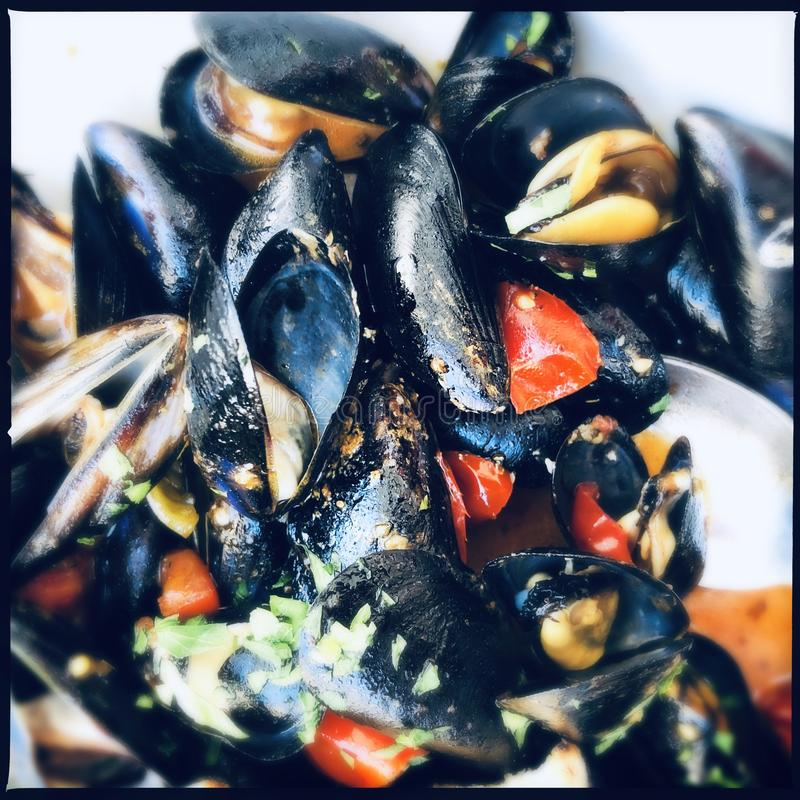 Mussels in white wine royalty free stock photos