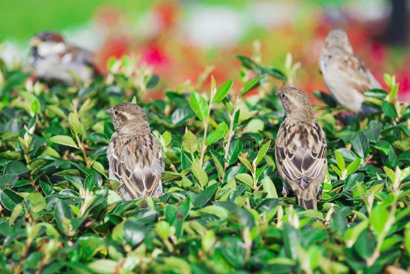 Mussenvogel in de struik royalty-vrije stock afbeelding