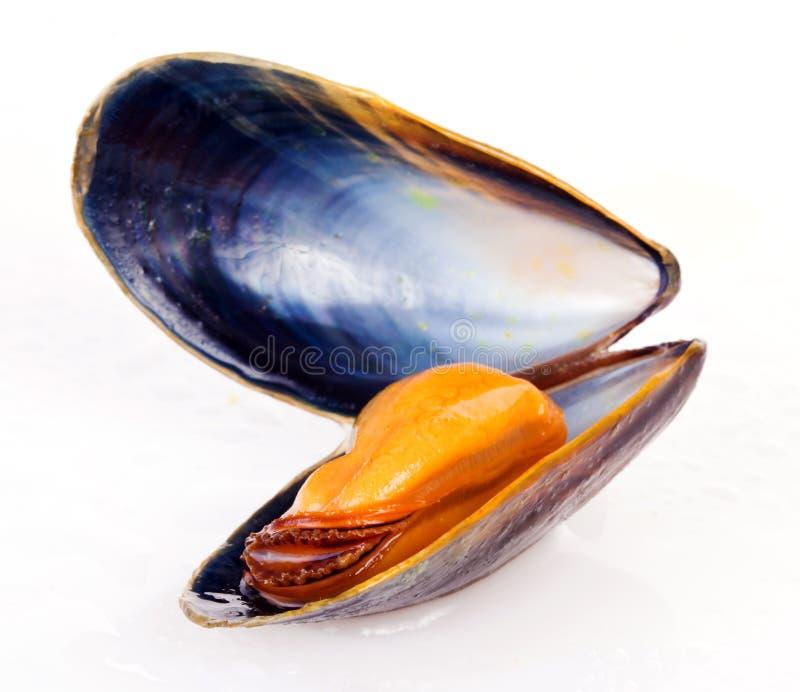 mussla arkivbild
