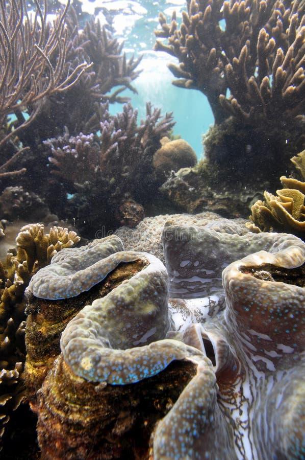 musslajätte arkivfoto