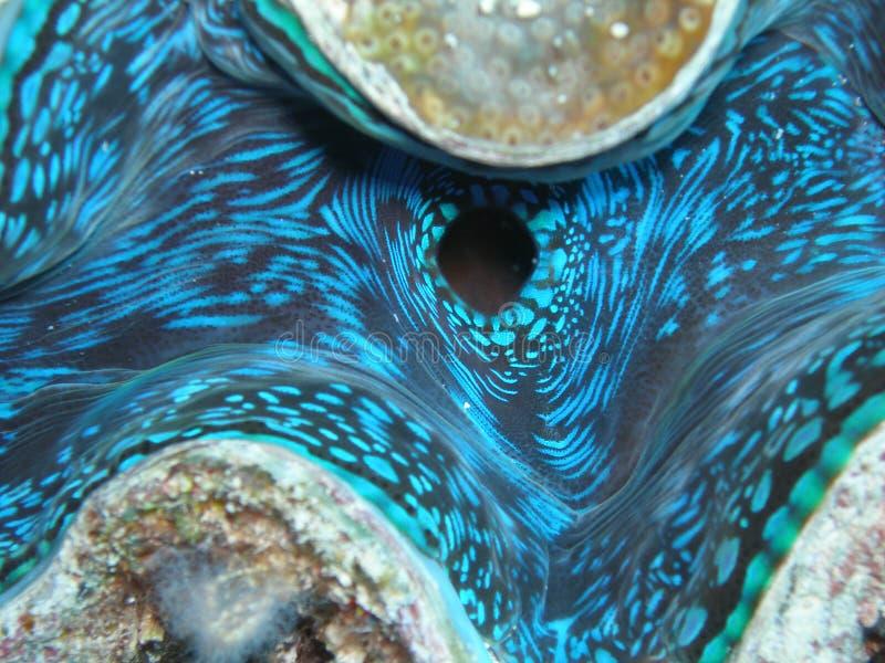 musslajätte royaltyfri bild