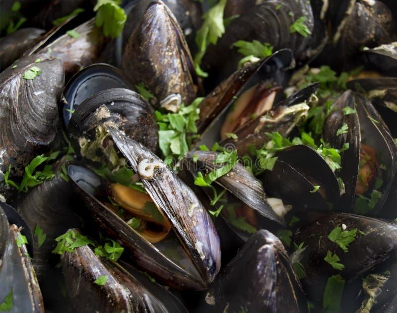 musslor royaltyfria foton