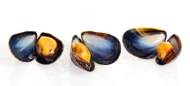 musslor fotografering för bildbyråer