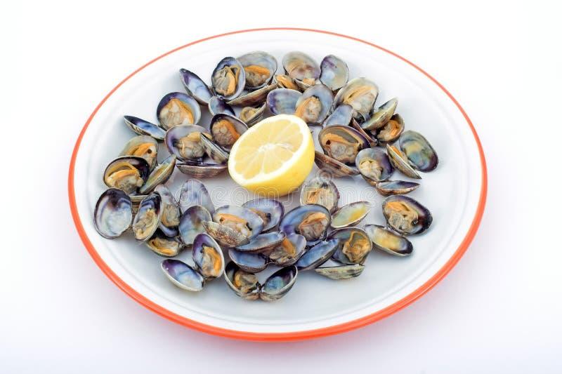 Download Musslor fotografering för bildbyråer. Bild av skaldjur - 506081