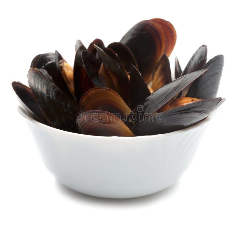 Musslor i den vita maträtten arkivbild