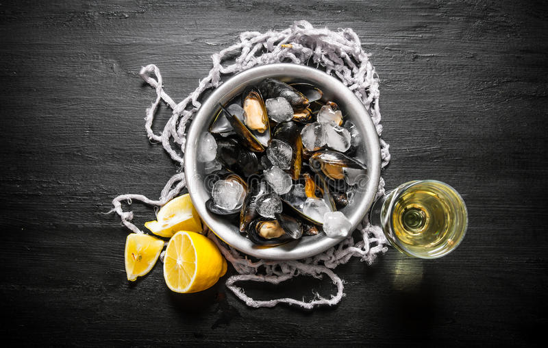 Musslor i en kopp med is, vin och citronen royaltyfria foton