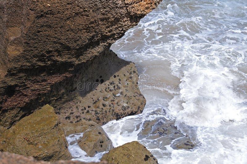 Musslor vaggar på på havsframdelen arkivfoton