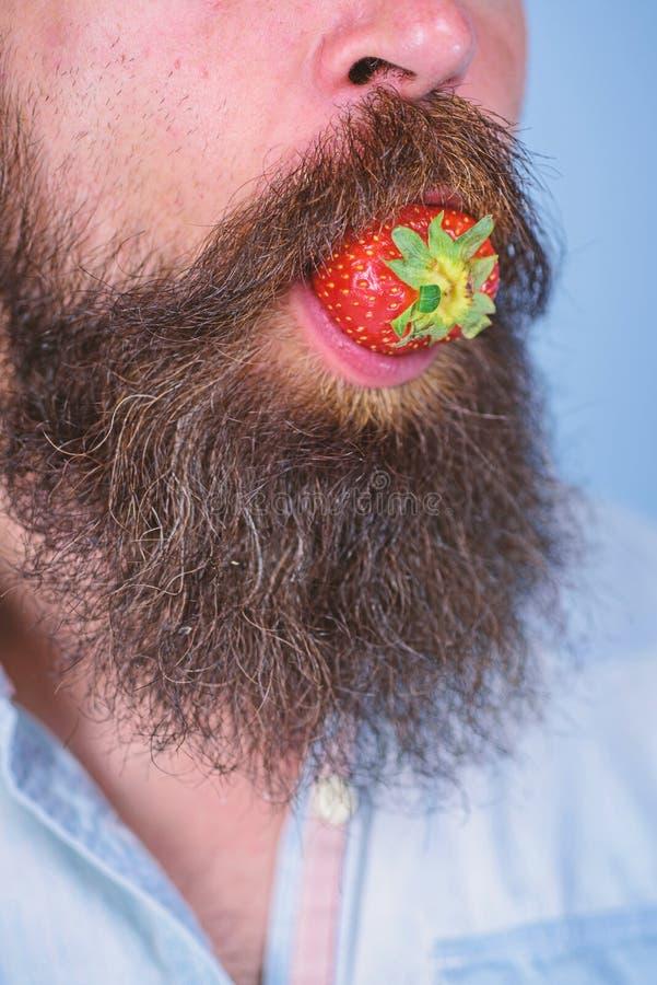 Αρσενική στόμα γενειάδα μούρων mustache Η αρσενική γενειάδα προσώπου δοκιμάζει τη φράουλα Γαστρονομική ευχαρίστηση Το άτομο τρώει στοκ εικόνες