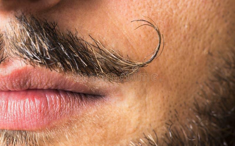 Mustache macro shot. royalty free stock photography
