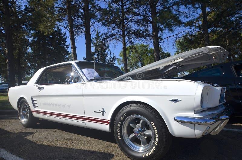 Mustang 1966 stockfotografie