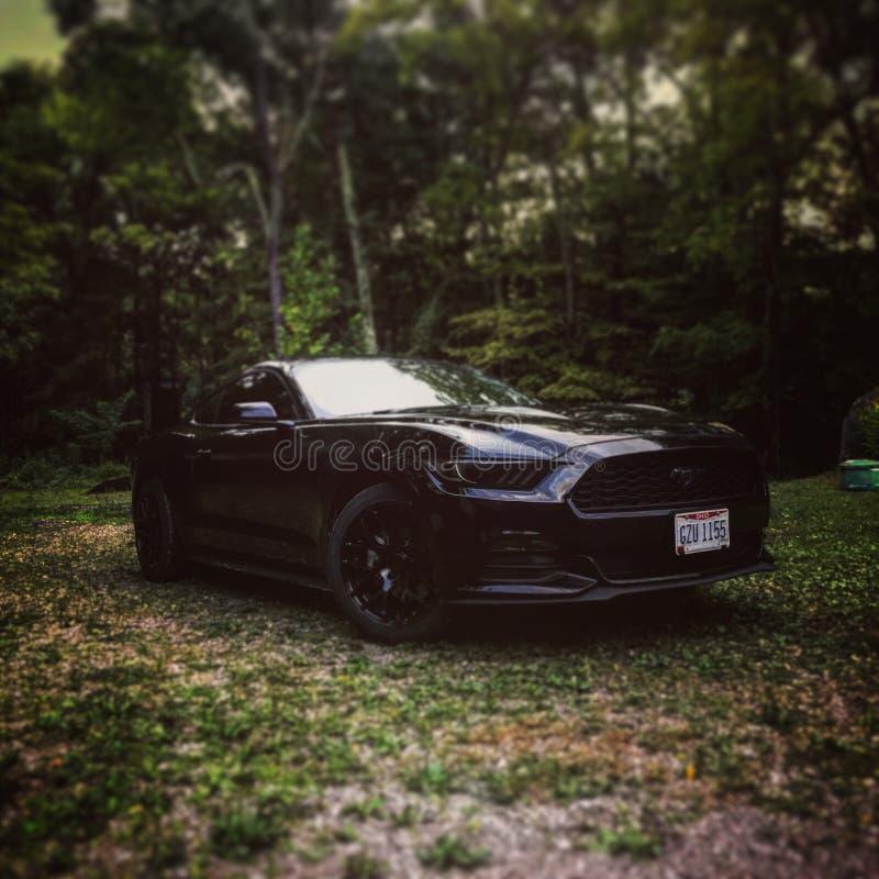 Mustang 2017 del nero fotografia stock