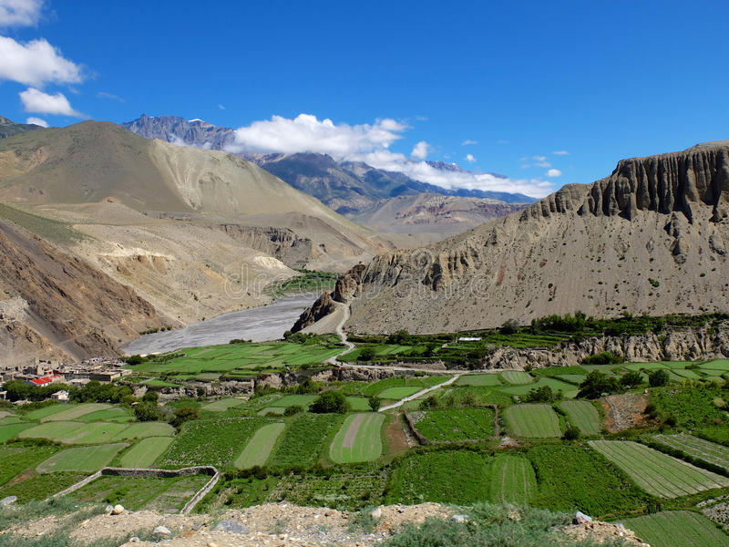 Mustang en Himalaya images stock