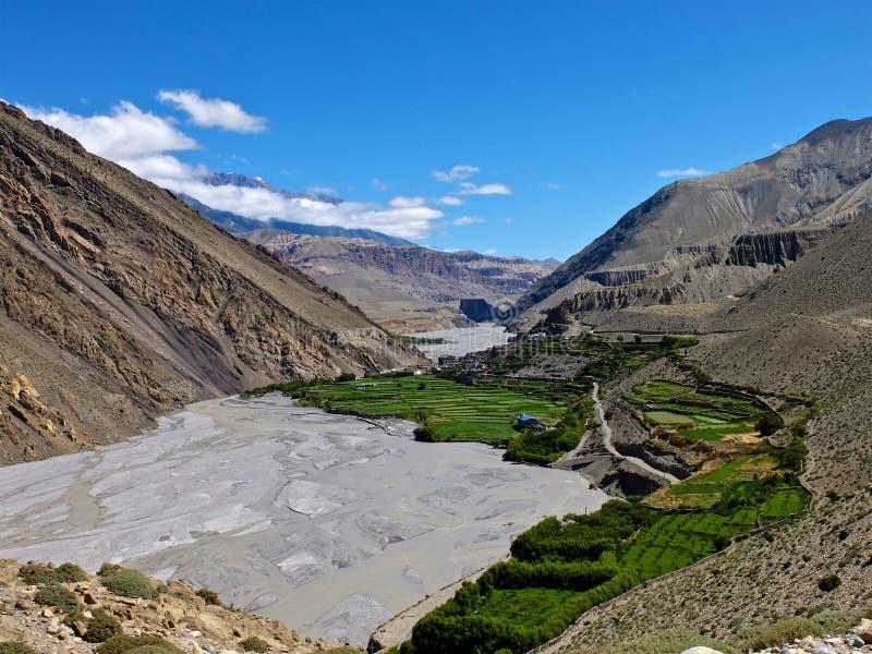 Mustang en Himalaya photo stock