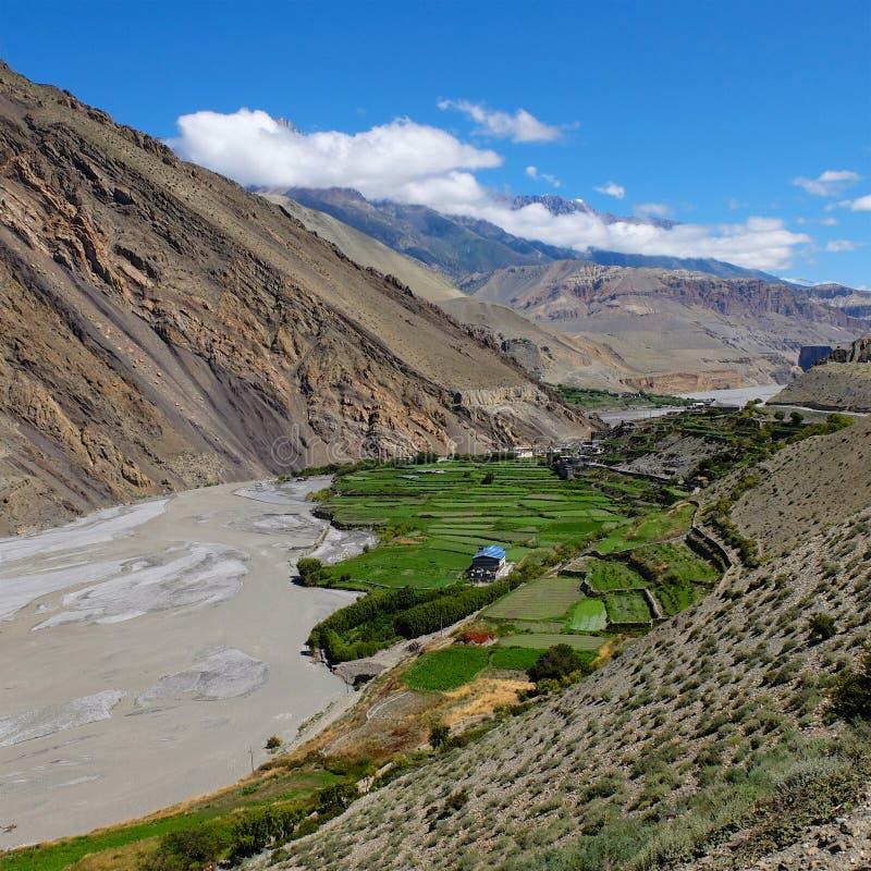 Mustang en Himalaya images libres de droits