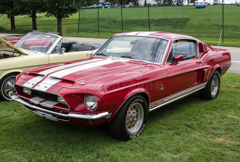 Mustang för Ford shelby kobra gt500 royaltyfri fotografi
