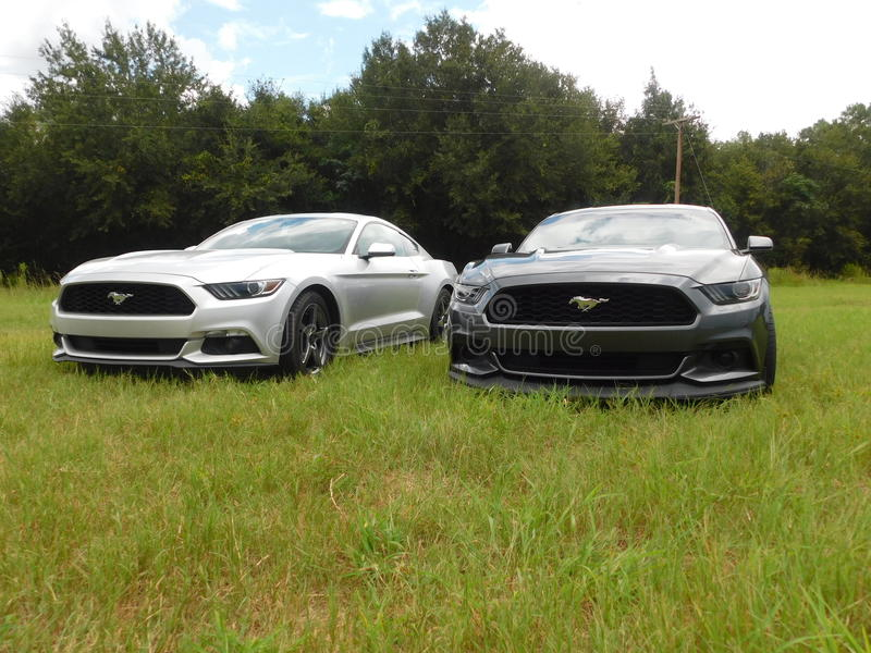 Mustang Fever royalty free stock photo