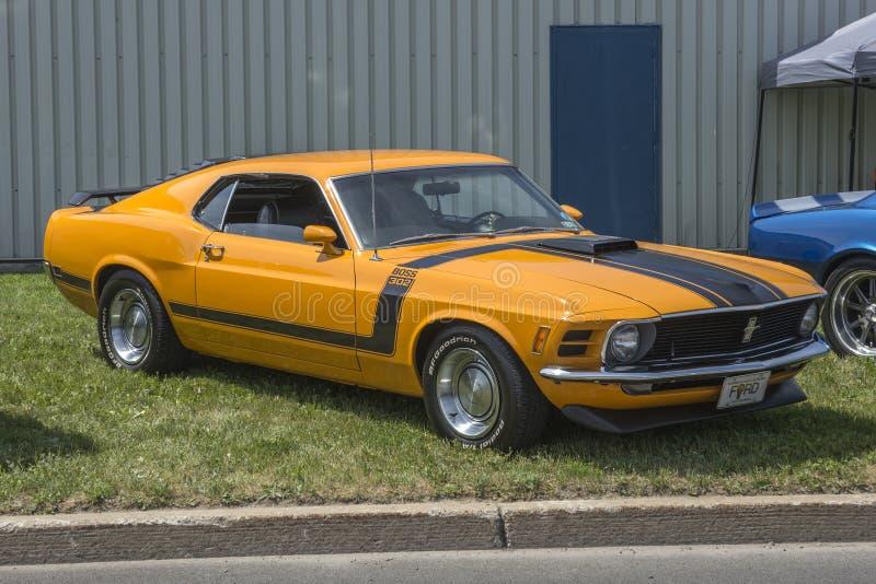 Mustang Boss 302 royalty free stock image