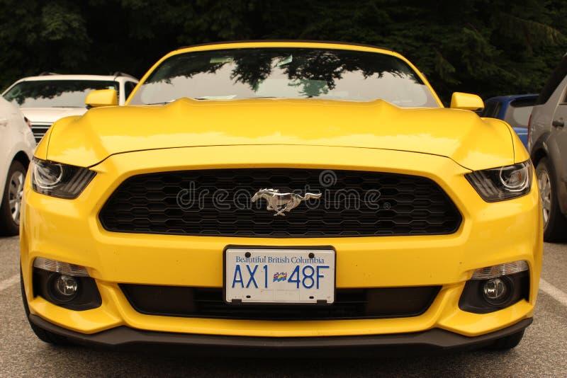 Mustang jaune images stock