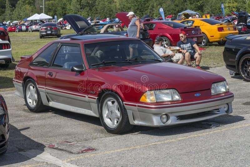 Mustang kobra fotografia stock