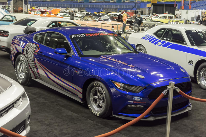 Mustang kobry strumień zdjęcie royalty free