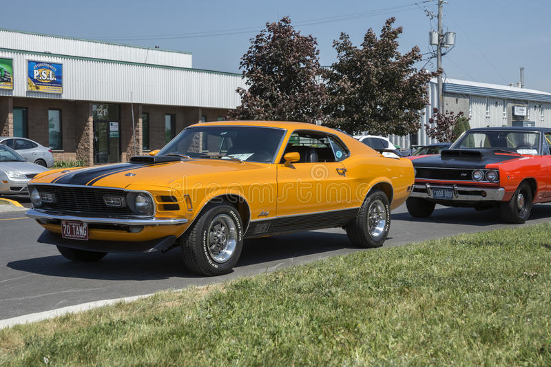 mustang mach1 obrazy royalty free