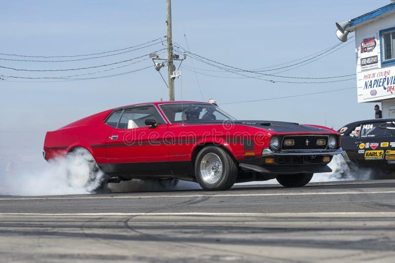 Mustang na ação imagem de stock