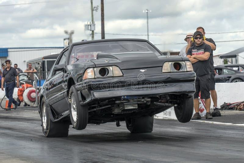 Mustang Wheelie lizenzfreie stockfotos
