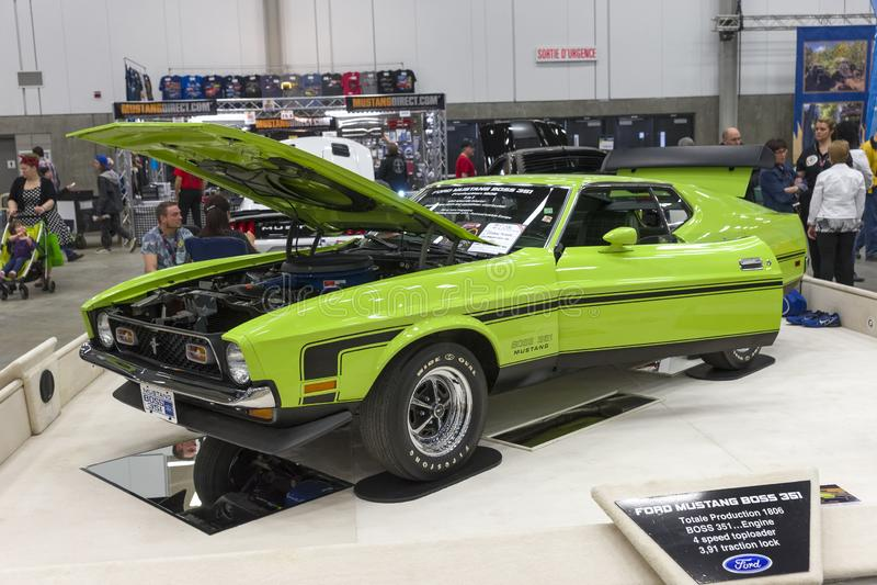 Mustangchef 351 stockfotos